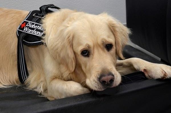 Diabete nel cane: cause, sintomi e cure