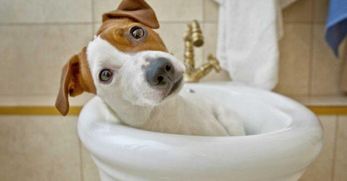 cane dentro un bidet