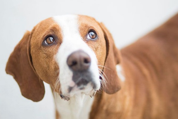 Guarire diarrea nel cane rimedi naturali e Terapia Probiotica