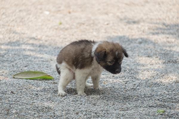 Diarrea nel cane: cosa la causa e come evitarla