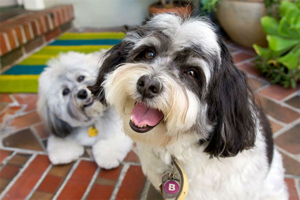 due cani in casa