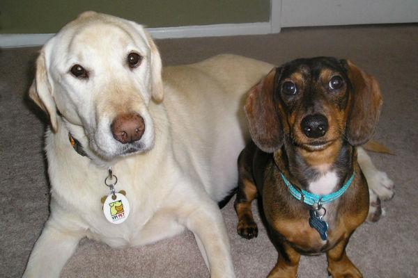 due cani che guardano