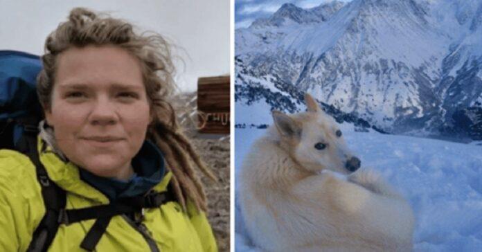 escursionista-salvata-lupo-bianco