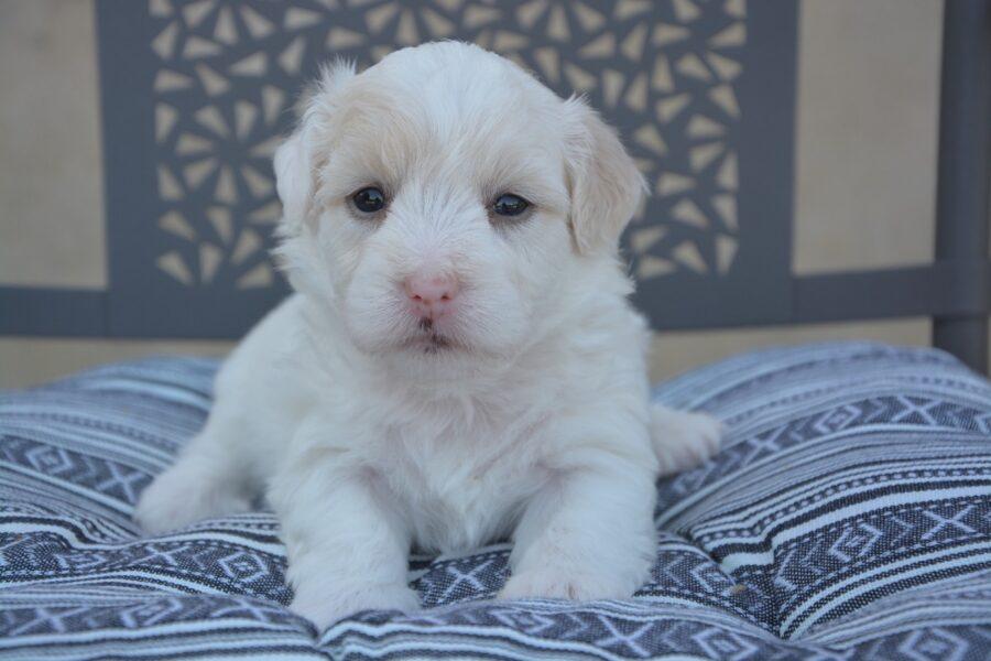 cucciolo di cane sul letto