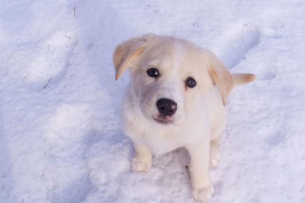 Gastroenterite nel cane, come affrontarla