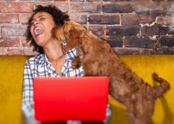 cane che lecca ragazza