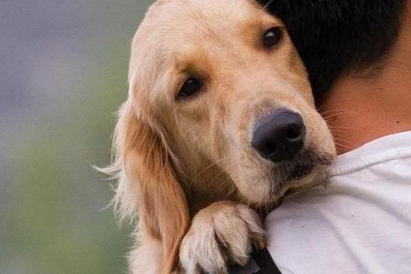 cane in braccio a padrone