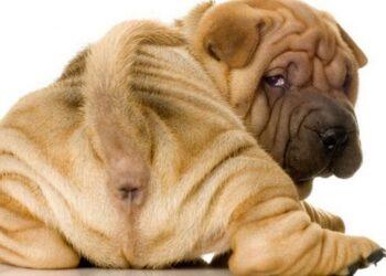 cane a cuccia di spalle