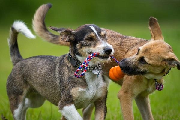 cani con fune