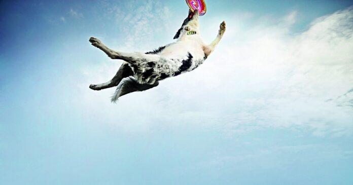 cane con frisbee