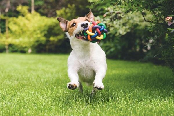 cane riporta palla