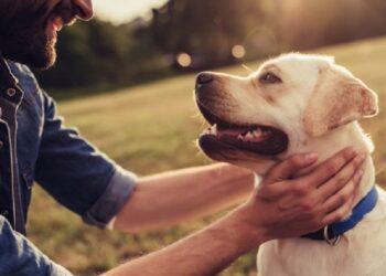 cane e padrone si guardano