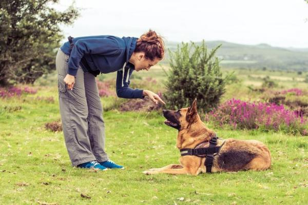 Osteopatia per il cane: cos'è? E funziona?