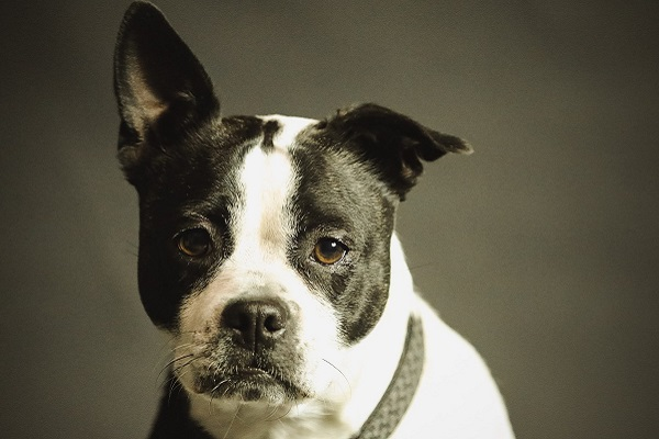 I cani evitano le persone negative?