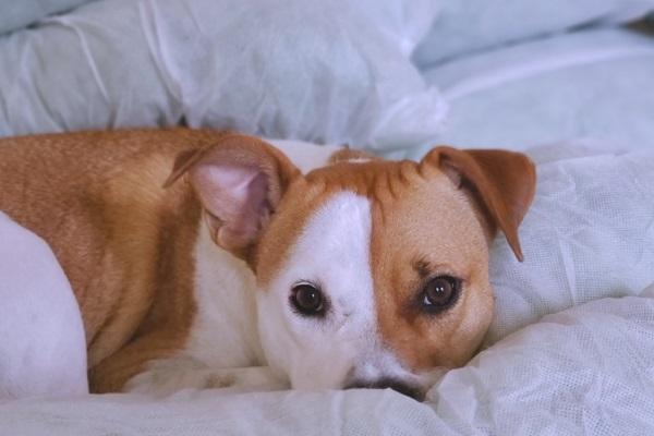 I cani hanno il raffreddore?