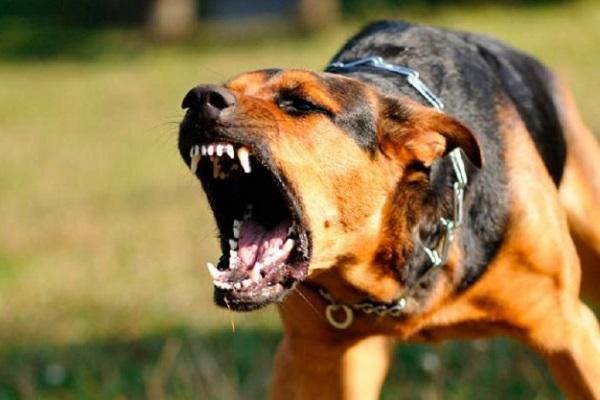 cane irato