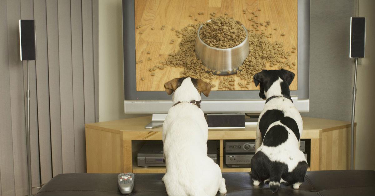 I cani possono guardare la tv?