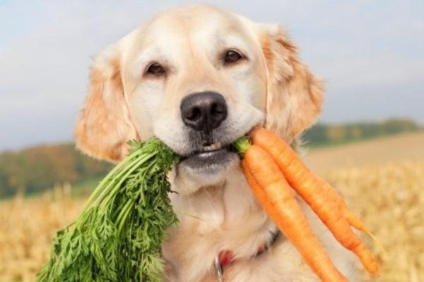 cane vegano