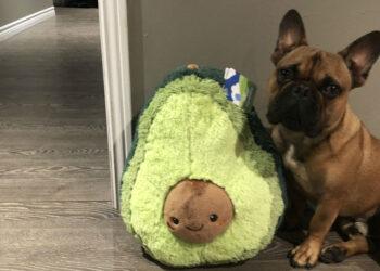 cane con cuscino di avocado