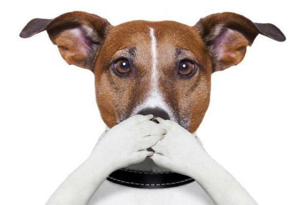 I cani possono mangiare l'aglio?