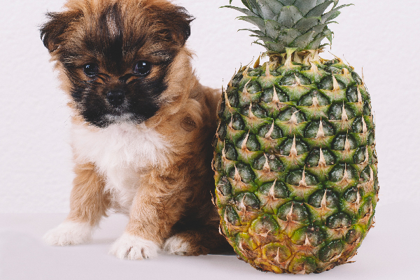 piccolo cane e ananas