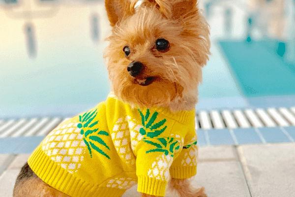york vestito da ananas