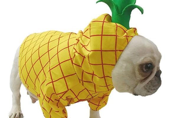 cani vestito di ananas