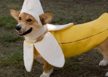 cane vestito da banana