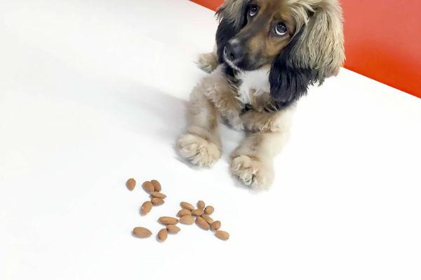 cucciolo di cane e mandorle