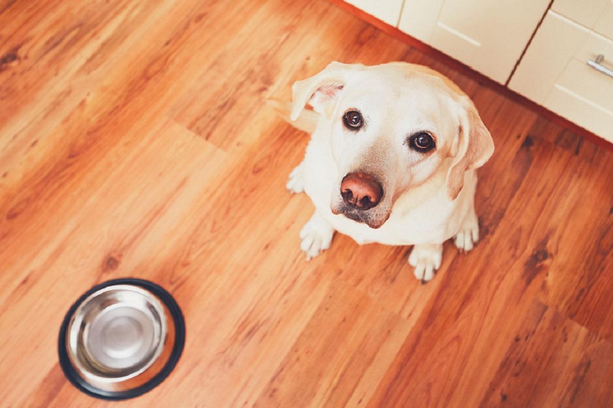 cane aspetta di mangiare