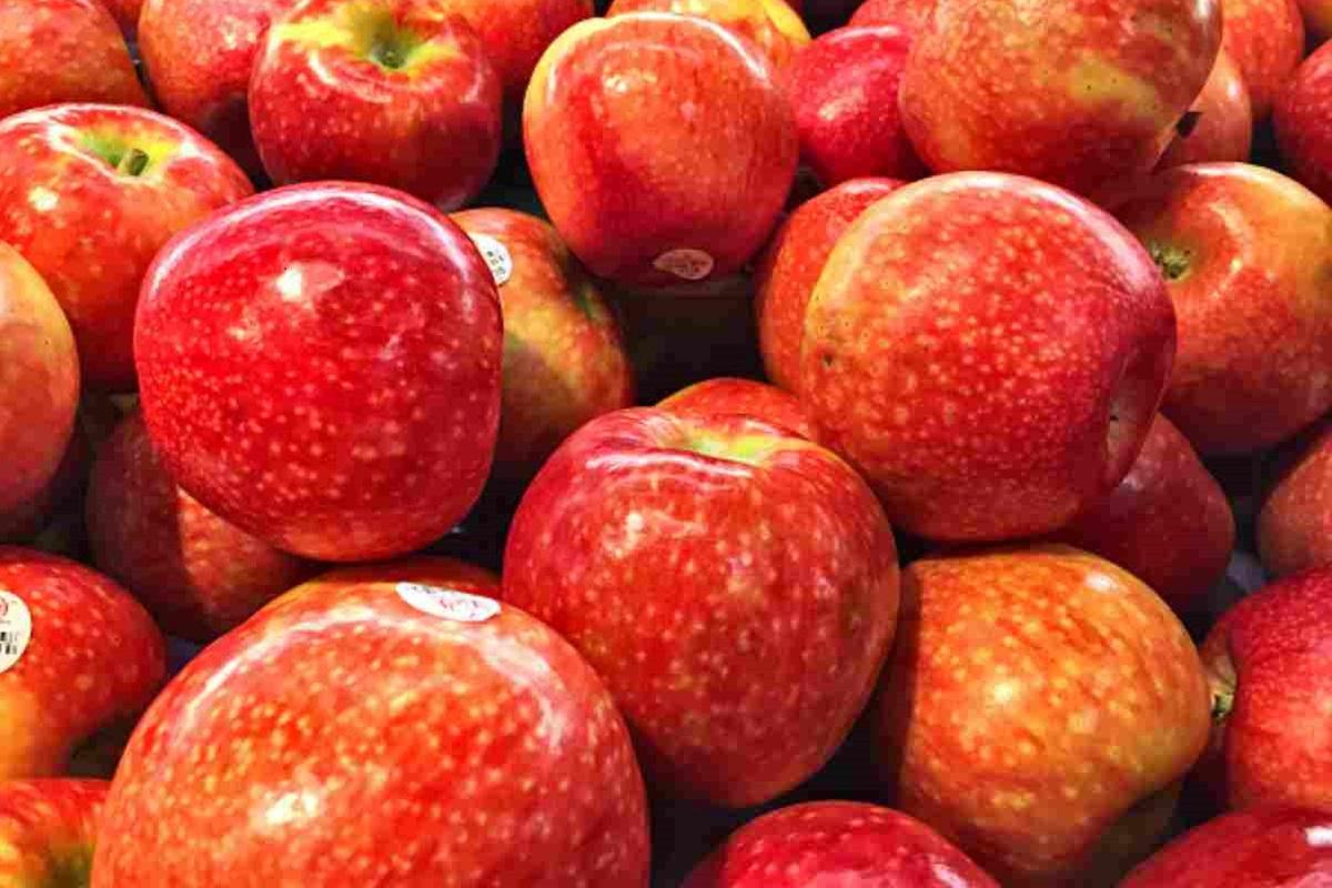 mele per cane