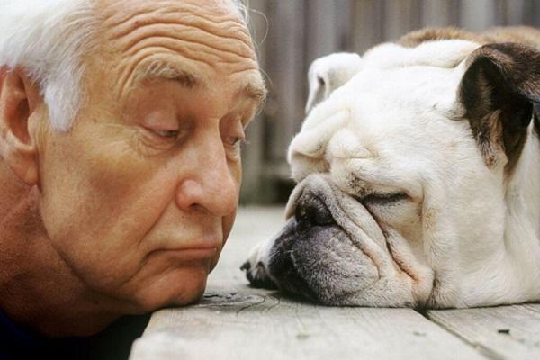 cane bulldog con anziano