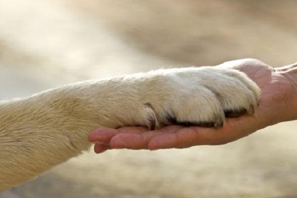 zampa di cane e mano umano