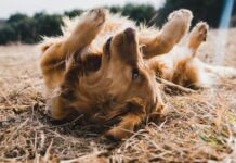 cane si rotola sulla terra