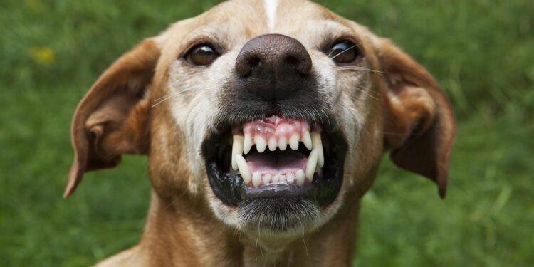 Il cane morde: che faccio?