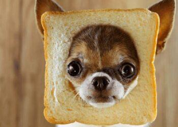 cane con cornice di pane