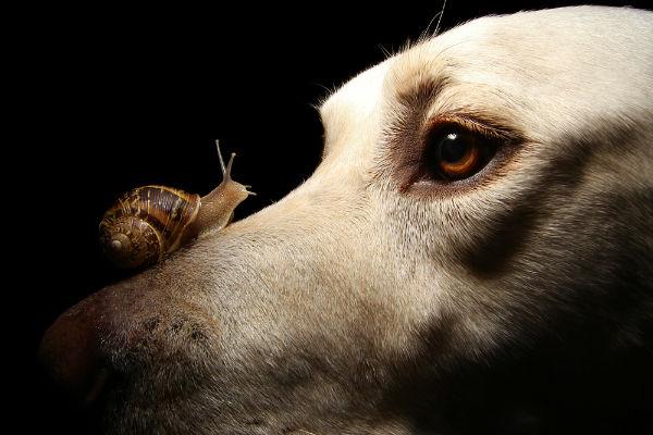 Il cane può mangiare le lumache?