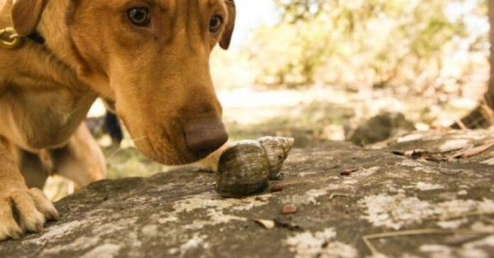 cane e lumaca nel bosco