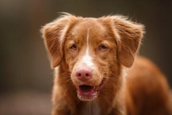 Il cane respira male, che significa?