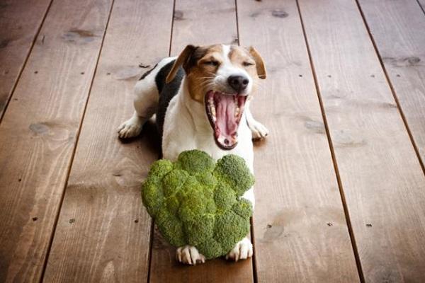 cane con broccolo