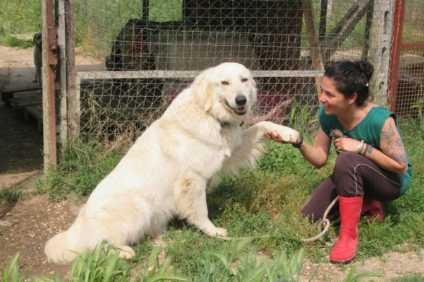 Come insegnare al cane a dare la zampa