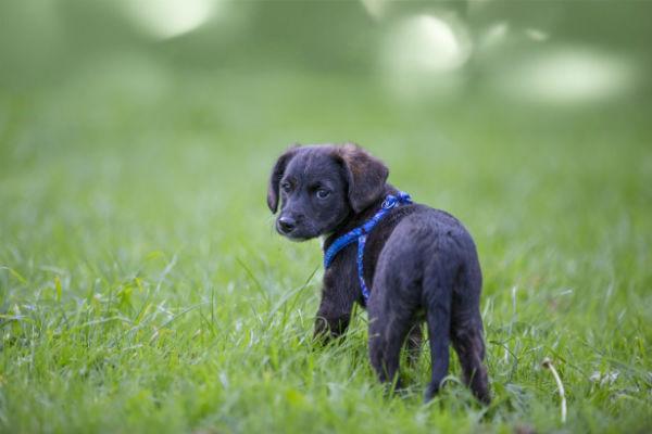 Insetti pericolosi per i cani: tutto quello che dobbiamo sapere