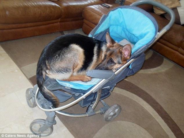 Cane crede di essere un bambino
