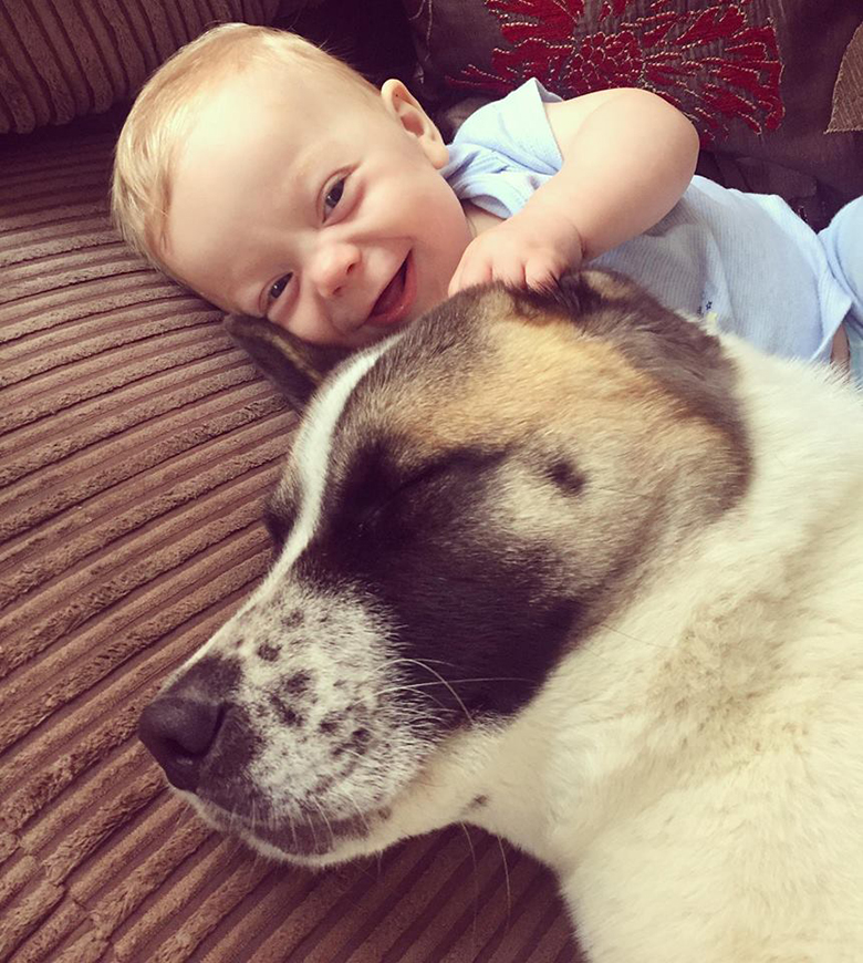 Cane salva la vita ad una donna incinta