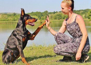 cane dà la zampa a ragazza