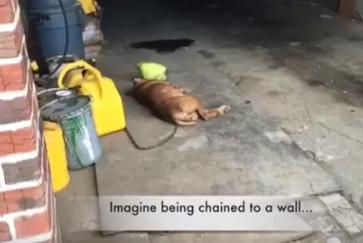 La cagnolina Lola che amava i cuscini