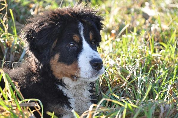 cane tra l'erba