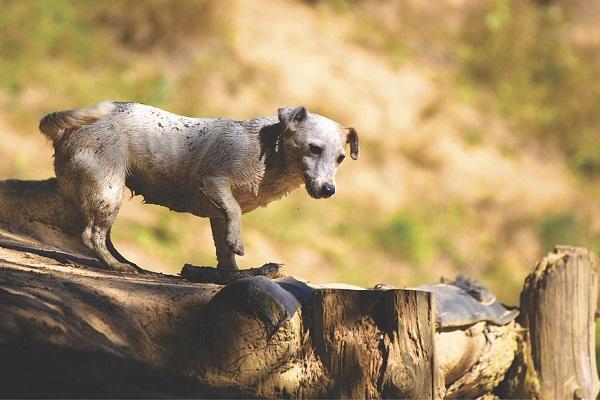 cane in esplorazione