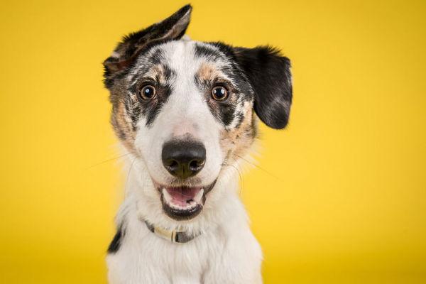 Malattie dei cani: le più comuni