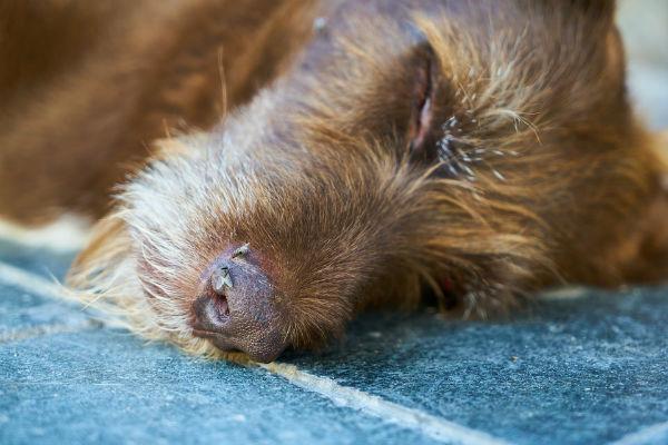 Malattie della pelle dei cani, quali sono?